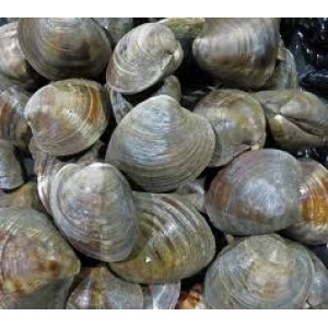 Little Neck & Top Neck Clams